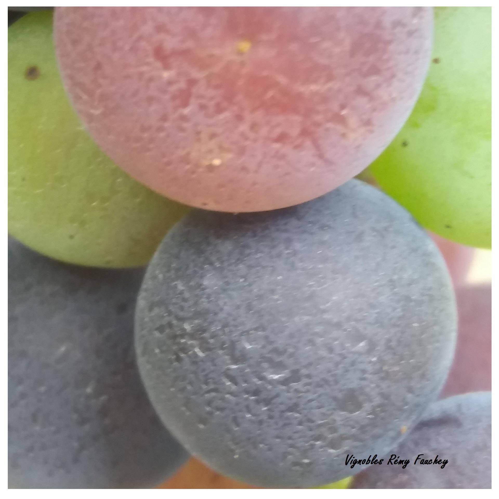 chateau-linclassable-raisin-couleur