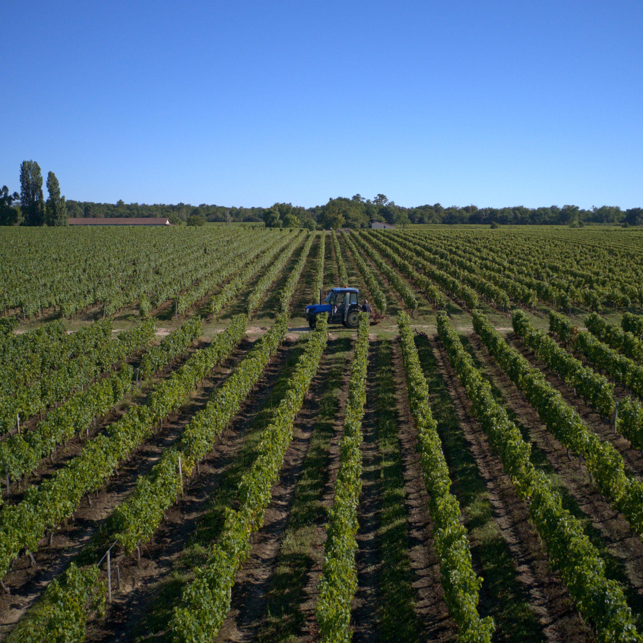 paysage rang de vignes avec tracteur et ciel bleu